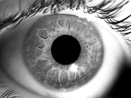 firefly-eye.jpg