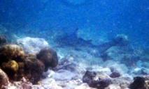 Shark11234